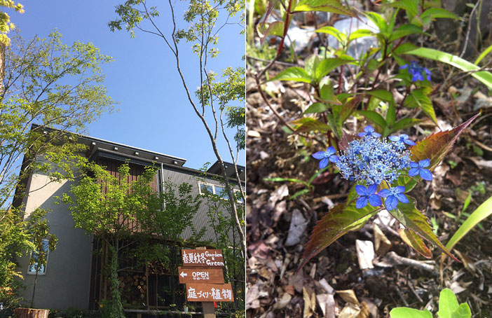 STEP2雑木と草花の小道